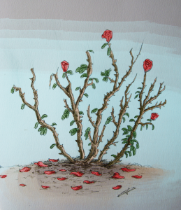rosebush_BenHall